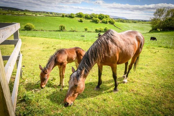 about-gallery-4-pony-foal