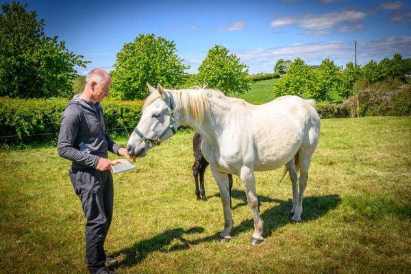 feeding-white-pony