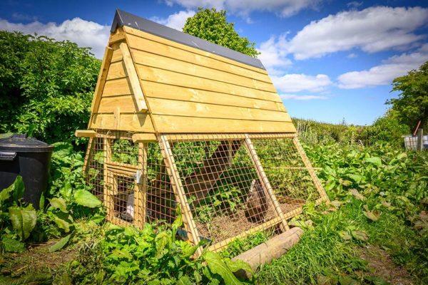 hen-coop
